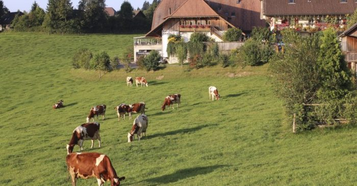 Swiss vote on bids to improve food quality, protect farmers