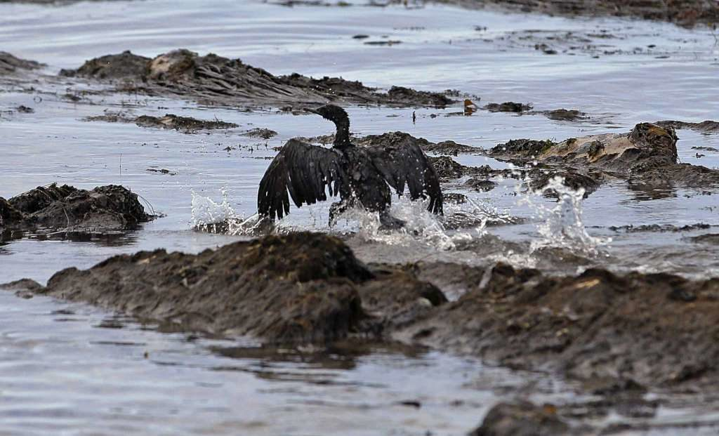 an oil-covered bird flaps its wings amid at Refugio State Beach, north of Goleta, Calif. A California jury has found a pipeline company guilty of nine criminal charges for causing a 2015 oil spill that was the state's worst coastal spill in 25 years. The jury reached its verdict against Plains All American Pipeline of Houston on Friday, Sept. 7, 2018, following a four-month trial. The jury found Plains guilty of a felony count of failing to properly maintain its pipeline and eight misdemeanor charges, including killing marine mammals and protected sea birds