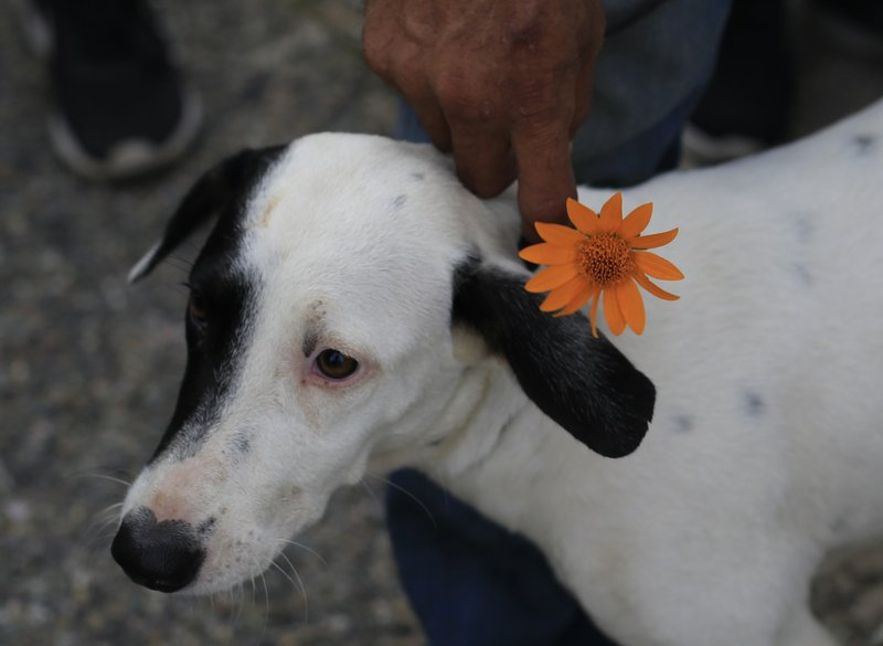 A migrant from Bolivia tries to put a flower on his dog