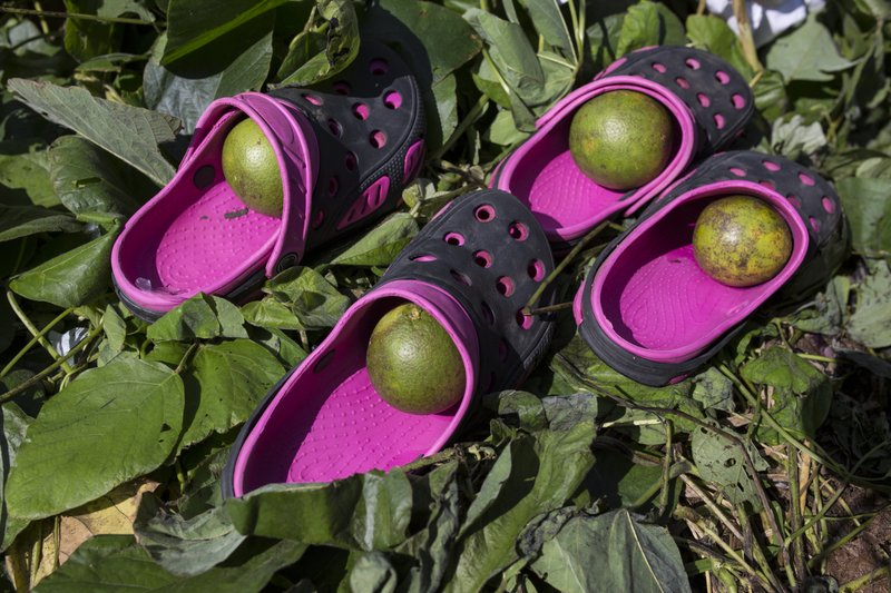 FILE - In this Oct. 25, 2018 file photo, oranges sit in the flip flops of members of a U.S.-bound caravan of Central American migrants as their owners take a dip in a river in Pijijiapan, Mexico. Inspired by their progress and outpouring of support from townspeople along the way, several smaller caravans of migrants have formed in Central America in recent weeks in an attempt to improve their odds of making it to the U.S. (AP Photo/Rodrigo Abd, File)