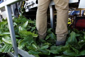 U. S. , Canada warn about E. coli in romaine lettuce