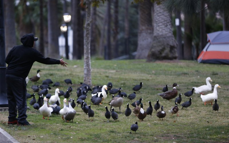 A person feeds birds in Echo Park under a light rain in Los Angeles Wednesday, Dec. 5, 2018. A fall storm is causing slick conditions on Southern California freeways but isn't expected to generate enough rain to trigger mudslides or debris flows on hillsides charred by recent fires. (AP Photo/Damian Dovarganes)
