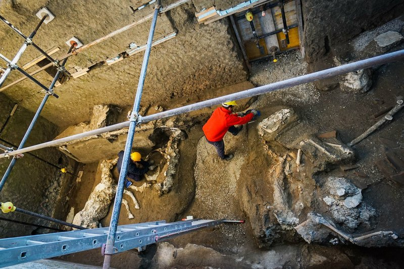 An archaeologist inspects the remains of a horse skeleton in the Pompeii archaeological site, Italy, Sunday, Dec. (Cesare Abbate/ANSA Via AP)