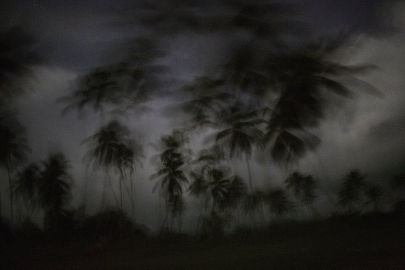 This Sept. 4, 2018 photo shows palm trees as the day begins to break in Irlaya, Honduras. With more than 60 per cent of its 9 million population living in poverty, Honduras is one of the poorest countries in Latin America, and the Mosquitia is one of the most impoverished areas. (AP Photo/Rodrigo Abd)
