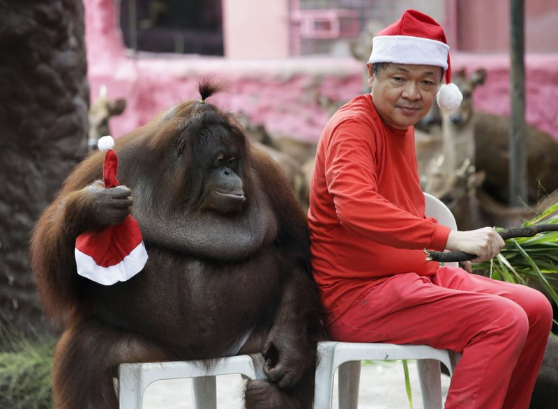 In this Friday, Dec. 21, 2018, file photo, zoo owner Manny Tangco sits beside an orangutan named