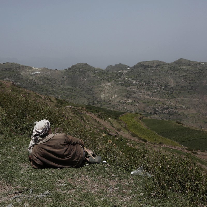 A farmer gazes at mountains where the terraces were planted with corn, barbary figs and qat on the side of a road in Ibb, Yemen on Aug. (AP Photo/Nariman El-Mofty)