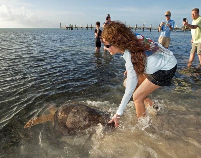 In this photo provided by the Florida Keys News Bureau, Bette Zirkelbach, manager of the Florida Keys-based Turtle Hospital, helps guide