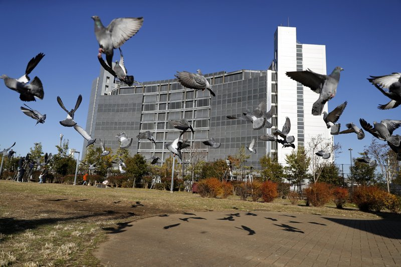 FILE - In this Dec. 25, 2018, file photo, pigeons fly near Tokyo Detention Center, where former Nissan chairman Carlos Ghosn and another former executive Greg Kelly, are being detained, in Tokyo. (AP Photo/Eugene Hoshiko, File)