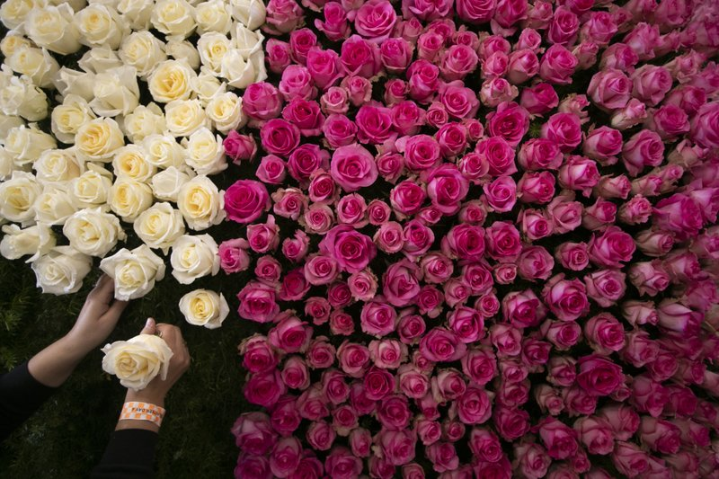 Sabrina Thorp decorates a Rose Parade float with roses Monday, Dec. 31, 2018, in Pasadena, Calif.  Final preparations are underway for Pasadena's 130th Rose Parade on New Year's Day, which forecasters say could challenge spectators with chilly and blustery conditions as a cold Santa Ana wind event develops in Southern California. (AP Photo/Jae C. Hong)