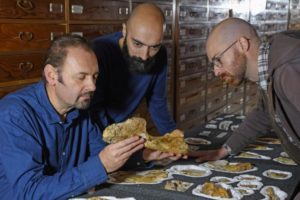 Italians find evidence of largest, oldest meat-eating dinosaur
