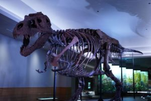 World-famous t. Rex Sue gets new lair in Chicago