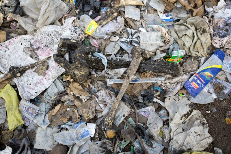 In this Nov. 21, 2018 photo, human bones lay amid garbage at a pig farm where witnesses said bodies from a Nov. (AP Photo/Dieu Nalio Chery)