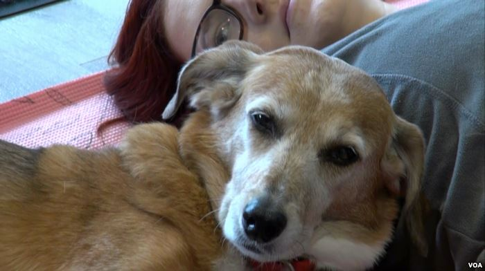 After the calss Marieka Johnson and her best friend, a sweet terrier mix name