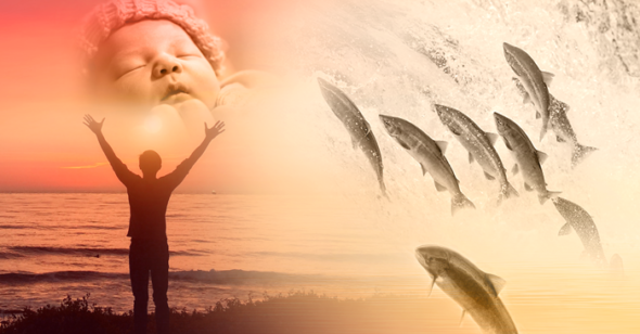 Salmon, the sea, and the meaning of life (Video)