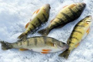 Though later than usual, Erie welcomes ice fishing season