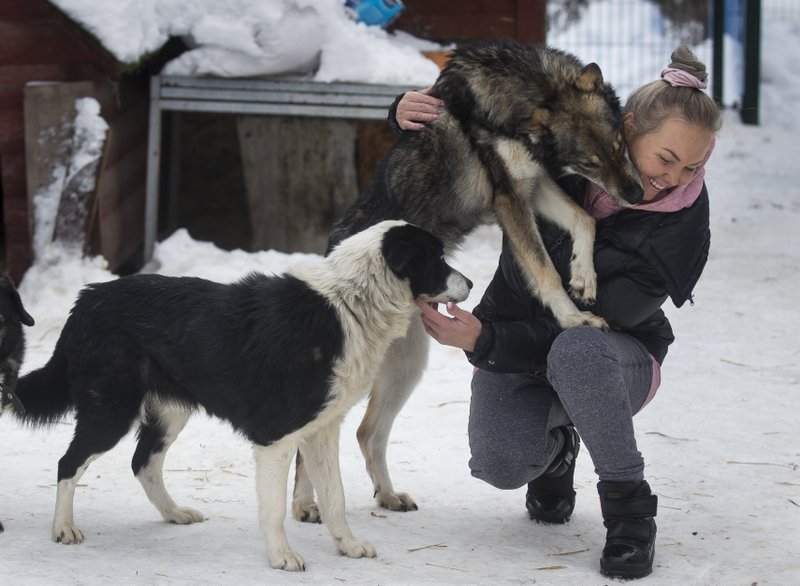 In this photo taken on Thursday, Jan. 31, 2019, Ilona Reklaityte, founder of a dog shelter, copes with two of her charges in Vilnius, Lithuania. (AP Photo/Mindaugas Kulbis)