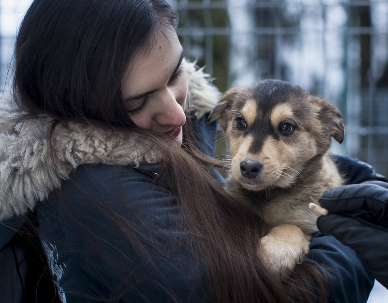 In this photo taken on Friday, Feb. 1, 2019, a potential pet owner looks at a stray dog at a shelter in Vilnius, Lithuania. (AP Photo/Mindaugas Kulbis)