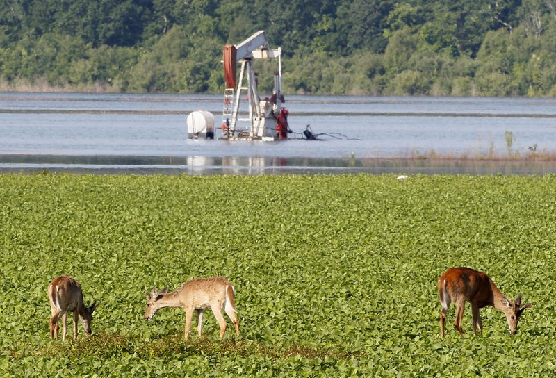 FILE - In this May 18, 2011, file photo, deer feed in a field near a partially-flooded oil derrick in Concordia Parish, La. (AP Photo/Patrick Semansky, File)