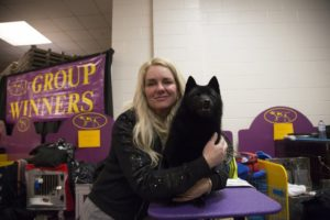 Dog drama at Westminster: Schipperke ruled out for top prize