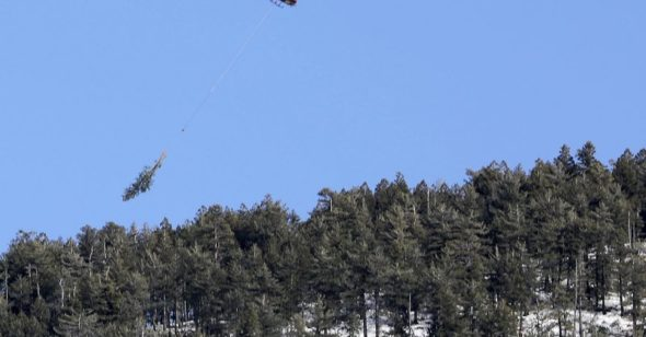 Helicopters haul logs for Flagstaff forest thinning project