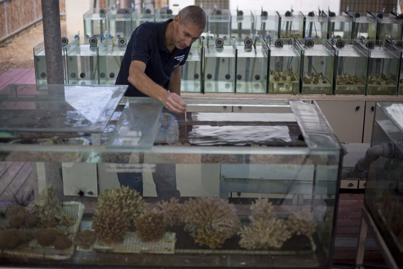 In this Monday, Feb. 11, 2019 photo, Maoz Fine, an expert on coral reefs at Bar-Ilan University, measures the water temperature of tanks treated to simulate future climate change conditions in a lab in the Red Sea city of Eilat, southern Israel. (AP Photo/Ariel Schalit)