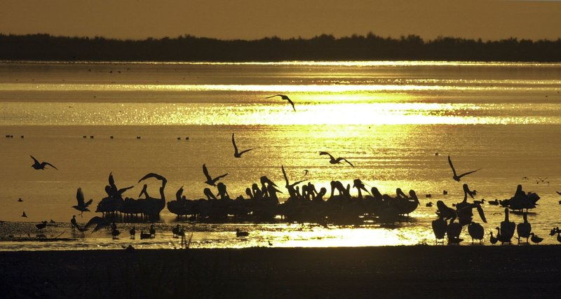 FILE - In this Sept. 3, 2002 file photo, birds find refuge at sunset on the surface of the Salton Sea, one of the largest pit stops for migratory birds in north America, which is at the center of the debate over the future of Southern California water, in the desert near Niland, Calif. (AP Photo/Reed Saxon, File)