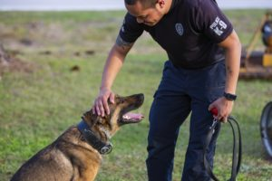 Florida bill would stiffen penalties for hurting police dogs