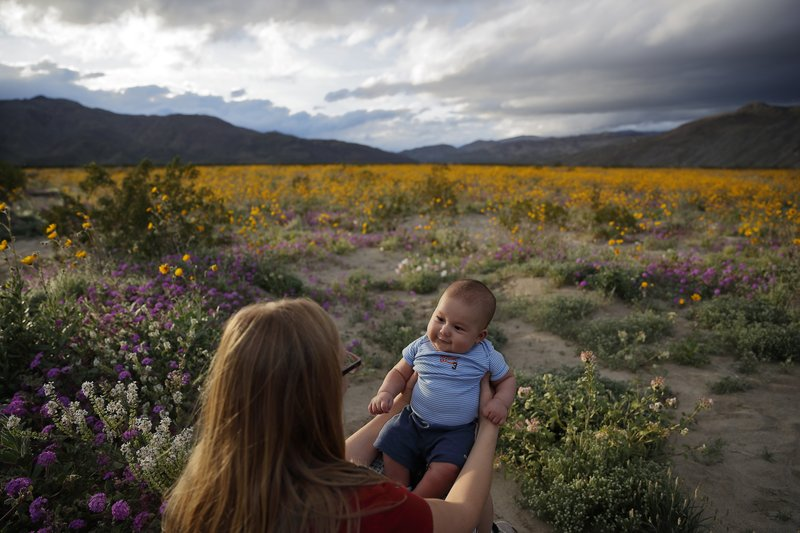 Rene Garcia holds her three-month-old son Brandon amid wildflowers in bloom near Borrego Springs, Calif. (AP Photo/Gregory Bull)