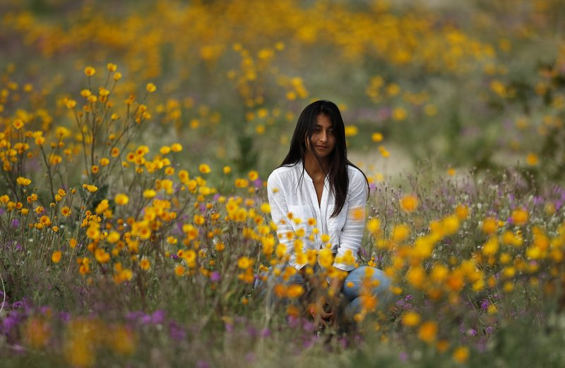 A woman sits in a field of wildflowers in bloom near Borrego Springs, Calif., March 6, 2019. (AP Photo/Gregory Bull)