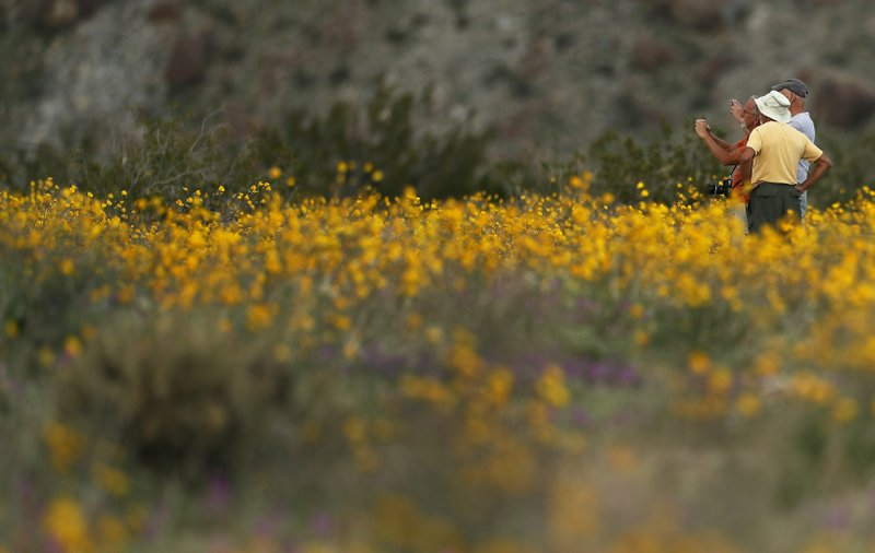 A group of men take pictures with their phones as they stand among wildflowers in bloom near Borrego Springs, Calif. (AP Photo/Gregory Bull)