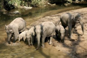 China sets aside crops for wild elephants to spare farmers