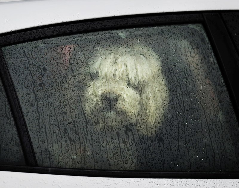A dog looks out a window from a car parked along Nicollet Avenue on a rainy day on Saturday, March 9, 2019, in Minneapolis. (David Joles/Star Tribune via AP)