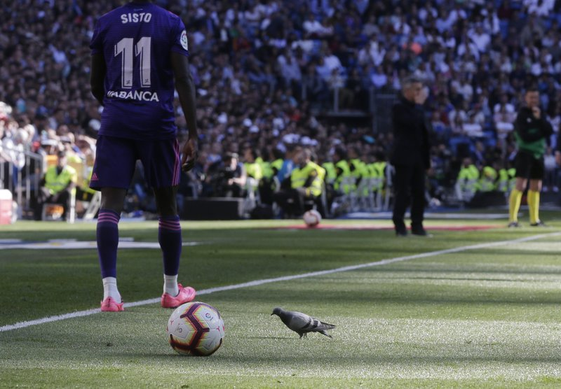A pigeon walks on the pitch during a Spanish La Liga soccer match between Real Madrid and Celta at the Santiago Bernabeu stadium in Madrid, Spain, Saturday, March 16, 2019. (AP Photo/Paul White)