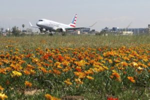 LA airport gets rare super bloom of flowers next to runways