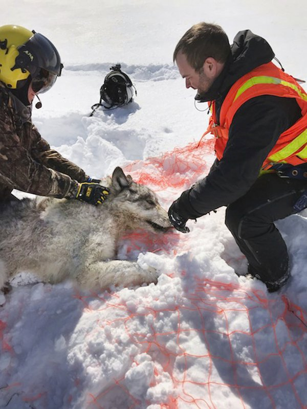 This Feb. 28, 2019 photo provided by the Ontario Ministry of Natural Resources and Forestry, the U.S. (Mike Allan/Ontario Ministry of Natural Resources and Forestry via AP)