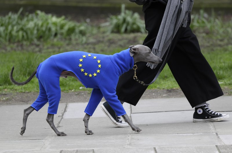 A demonstrator leads a dog wearing a suit in the EU colors during a Peoples Vote anti-Brexit march in London, Saturday, March 23, 2019. (AP Photo/Kirsty Wigglesworth)