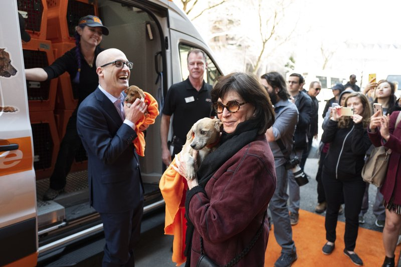 Nancy Silverman, center, holds the dog named Apple while Matt Bershadker, left, President and CEO of the ASPCA, holds Curry as the puppies were part of a group of 17 stray dogs that were transported to New York, Thursday, April 4, 2019. (AP Photo/Mark Lennihan)