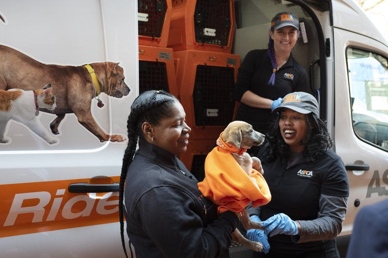 Workers with the ASPCA hold the puppy named Apple as she is unloaded from a van that made the trip to to New York from Mississippi, Thursday, April 4, 2019. (AP Photo/Mark Lennihan)