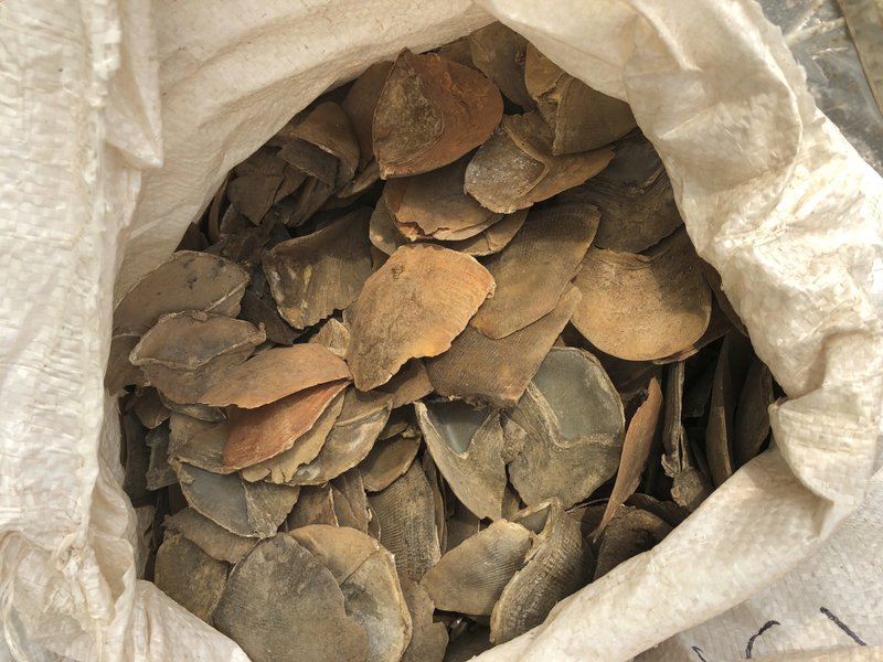 In this April 9, 2019, photo released by the National Parks Board, some of the 12 tons of pangolin scales worth around US$38. (National Parks Board via AP)