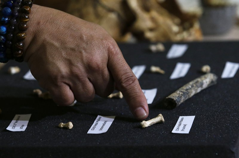 In this April 11, 2019, photo,, Filipino archeologist Armand Salvador Mijares shows fossil bones and teeth they recovered from Callao Cave belonging to a new species they called Homo Luzonensis during a press conference in metropolitan Manila, Philippines. (AP Photo/Aaron Favila)