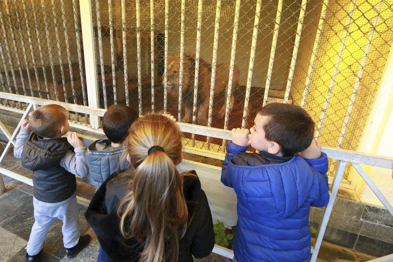 Children watch a lion in its cage at a zoo in Tirana, Thursday, April 18, 2019. An international animal welfare charity was locked in a spat Thursday with the Albanian government over three lions destined for a sanctuary in the Netherlands. (AP Photo/Hektor Pustina)