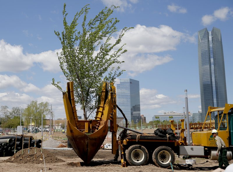 A Survivor Tree clone is transplanted on the grounds Scissortail Park in Oklahoma City, Friday, April 19, 2019. (Sarah Phipps/The Oklahoman via AP)