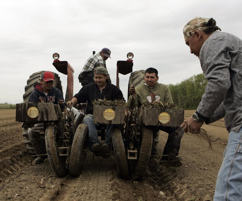 FILE- In this May 9, 2008 photo, farm workers plant strawberries at Yonder Fruit Farms in Valatie, N. (AP Photo/Mike Groll, File) (AP Photo/Mike Groll)