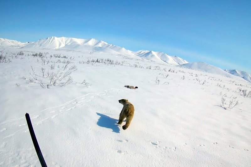 In this image made from video on Monday, April 22, 2019, rescue workers release a polar bear somewhere in Chukotka, Russian Far East. (AP Photo)