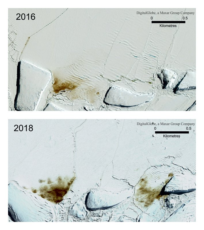 This combination of satellite photos provided by Maxar Technologies via the British Antarctic Survey shows the site of the Dawson Lambton emperor penguin colony in 2016 and 2018. (Maxar Technologies/British Antarctic Survey via AP) Satellite Images ©2019 Maxar Technologies