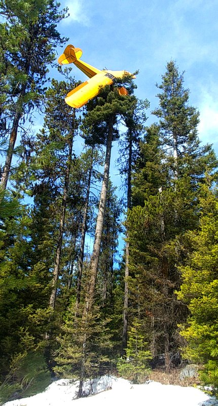 This undated photo provided by the Valley County Sheriff's Office shows a small plane where it came to rest at the top of a tree near the resort town of McCall, Idaho. (18-meter) tree as he was trying to crash-land in a field, officials said. Gregory was rescued from his perch atop the giant white fir by volunteer firefighter Randy Acker, who owns a tree-removal company. (Undersheriff Jason Speer/Valley County Sheriff's Office via AP)