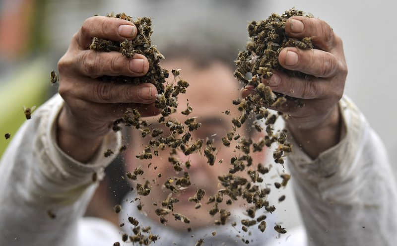 A protestor shows dead bees outside the annual general meeting of the Bayer stock company in Bonn, Germany, Friday, April 26, 2019. (AP Photo/Martin Meissner)
