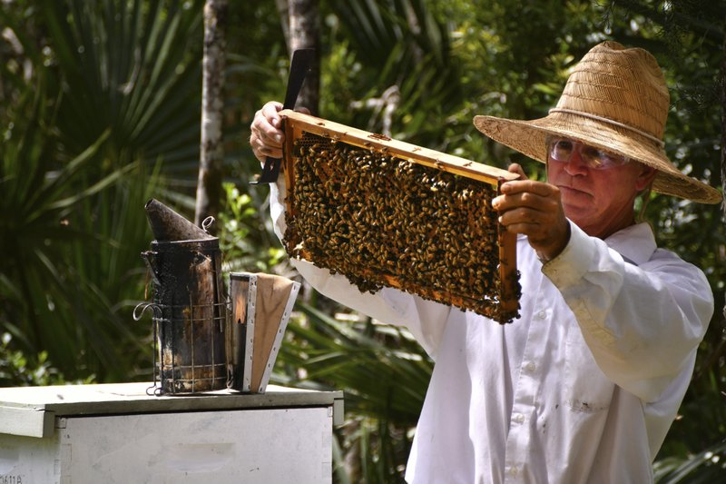 In this April 18, 2019 photo, Clifton L. Best, of CL Best Honey Bees, a professional bee remover, does maintenance on his hives in Canaveral Groves, Fla. (Malcolm Denemark/Florida Today via AP)