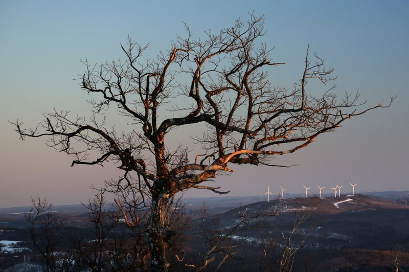 This Tuesday, March 19, 2019 photo shows a wind farm atop a hill behind a large tree in Canton, Maine. (AP Photo/Robert F. Bukaty)