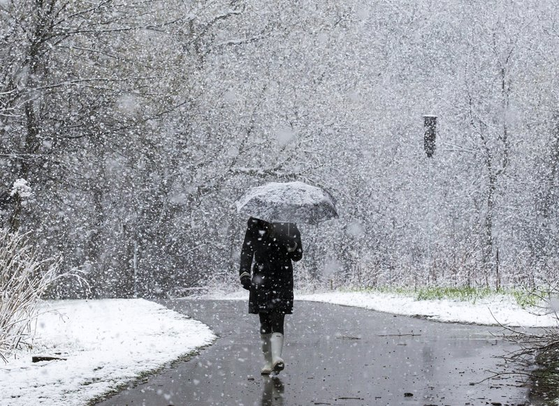 Jodi Frisk is surrounded by snowflakes while walking along a paved path near the Quarry Hill Nature Center on Saturday, April 27, 2019, in Rochester, Minn. (Andrew Link/The Rochester Post-Bulletin via AP)